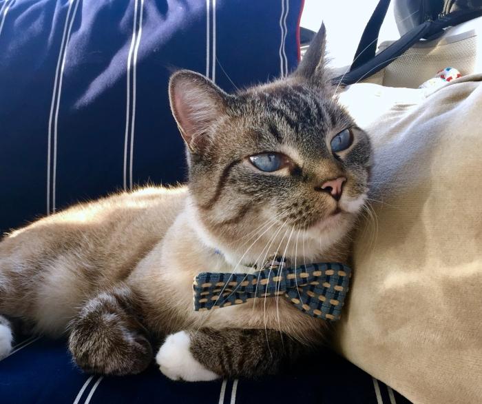 Hobie in bow tie
