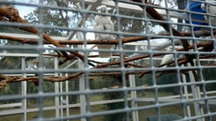 nicki in cage